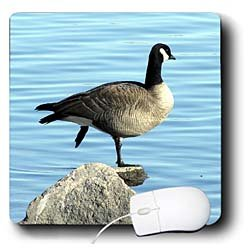 Cassie Peters Photography - Canada Goose Photographed by Angelandspot - Mouse Pads