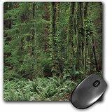 danita-delimont-rainforests-rainforest-olympic-peninsula-washington-usa-us48-wbi0083-walter-bibikow-