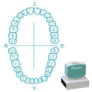 シャチハタ 角型印 5075号 医療用 人体図 / 歯(1)