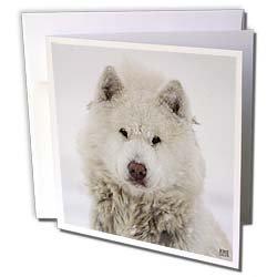 Kike Calvo Animals - Canadian Eskimo Dog Hudson Bay Churchill Northern Canada - Greeting Cards-6 Greeting Cards with envelopes