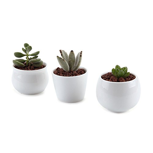 t4u-25-275-275-inch-ceramic-white-collection-no31-sucuulent-plant-pot-cactus-plant-pot-flower-pot-co