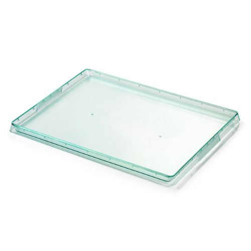 Restaurantware Large Modern Tray Plate 50 count box Sea Green