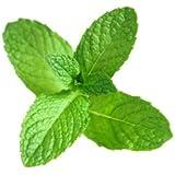 Mystique Hills - Organic Spearmint Tea (100 GR) Premium Quality