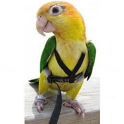 Image of Aviator Harness And Leash Large In Silver For Macaws (B003SLQ7TQ)