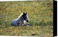 Pony in spring flowers Canvas Print / Canvas Art - Artist Pierre Leclerc