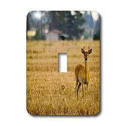 Danita Delimont - Deer - Whitetail Deer, wheat near Creston Montana - US27 CHA1177 - Chuck Haney - Light Switch Covers - single toggle switch