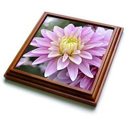 Dahlia Flower- Zen Flowers- Floral Photography - 8x8 Trivet With 6x6 Ceramic Tile