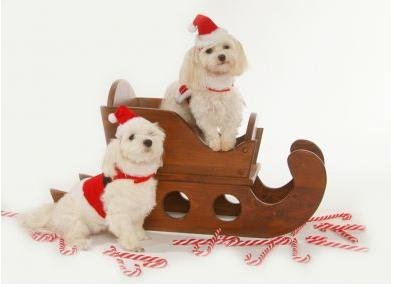 Dog Santa Suit - Santa Claus Santa Boy Harness Dog Christmas Outfit w/ Matching Hat & Leash - XX-Large (XXL)