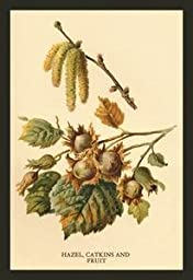 Paper poster printed on 20 x 30 stock. Hazel, Catkins and Fruit