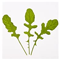 Arugula D2891A (Green) 500 Organic Seeds by David's Garden Seeds