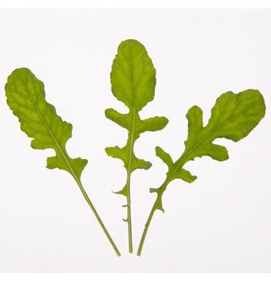 Arugula D2891A (Green) 500 Organic Seeds By David'S Garden Seeds