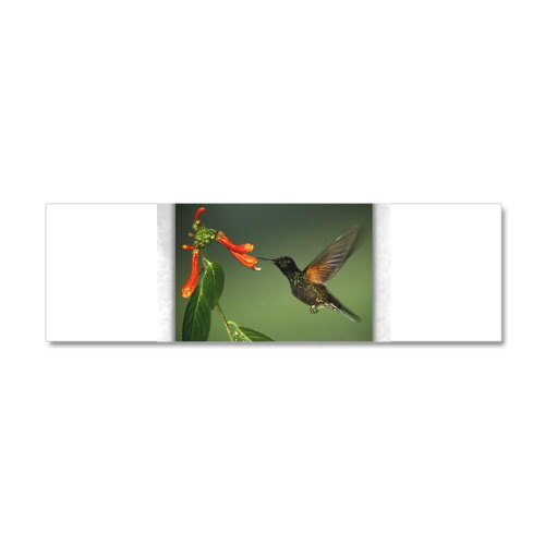 21 x 7 Wall Vinyl Sticker Green Violetear Hummingbird