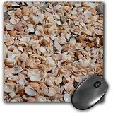 danita-delimont-cindy-miller-hopkins-shells-french-west-indies-shell-beach-detail-of-shell-covered-b