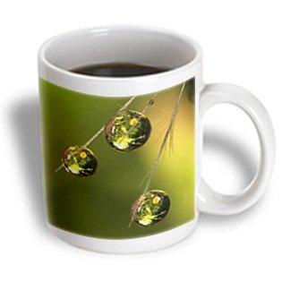 Danita Delimont - California - California, San Diego. Dandelion Seed - Us05 Bja0318 - Jaynes Gallery - 11Oz Mug (Mug_88223_1)