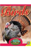 Birds with Code (Outdoor Hunting Guide)