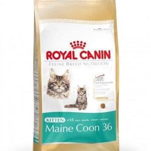 royal canin kitten 36 pas cher. Black Bedroom Furniture Sets. Home Design Ideas