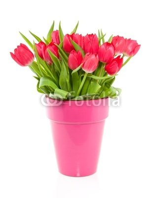 "Wallmonkeys Peel and Stick Wall Decals - A Bouquet of Red Colorful Tulips in a Pink Vase Isolated over Wh - 18""H x 15""W Removable Graphic"
