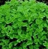 Suffolk Herbs - Oregano Greek