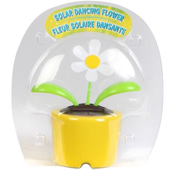 Solar Dancing Flower - Daisy (In Bubble Package - Pot Colors Vary)