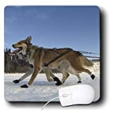 31RSBeMTkiL. SL160  Krista Funk Creations Sled Dogs   Yukon Quest Sled Dogs on the Takhini River   Mouse Pads Reviews