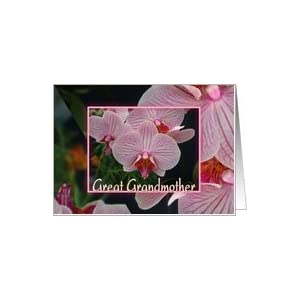 : Birthday-For Great Grandmother-Flowers-Pink and White