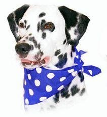 Bandana Polka Dot Navy by Alex Griffiths Cosipet Limited