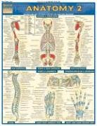 Anatomy Laminate Reference Chart: Includes Deep and Posterior Anatomy and Any New Structures (Quickstudy: Academic)