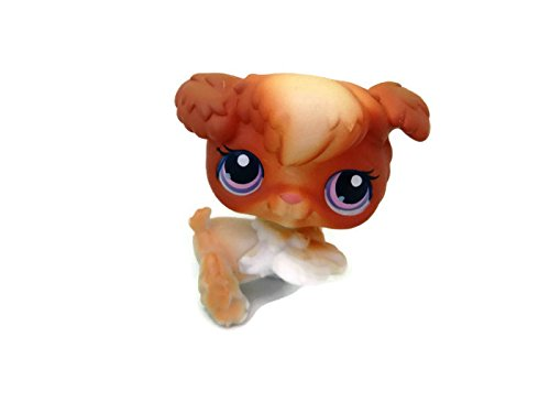 Poodle #37 (Orange, White Accents) - Littlest Pet Shop (Retired) Collector Toy - LPS Collectible Replacement Single Figure - Loose (OOP Out of Package & Print) - 1