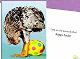 Avanti Chicken Laying Egg Easter Card - Let's see the bunny do that!