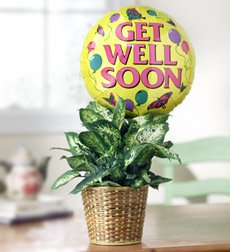Flowers by 1800Flowers - Get Well Green Plant with Balloon - Large