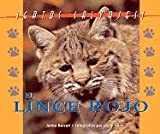 img - for Gatos Salvajes (Wild Cats of North America) - El Lince (The Bobcat) book / textbook / text book