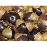 Premier Seeds Direct Tomato Tomatillo Purple includes 80 Seeds