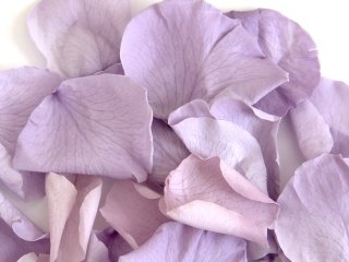 8 Cups Wedding Freeze Dried Rose Petals LAVENDER 1.5 Oz / 180 Petals