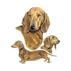 Dachshunds T-Shirts