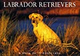 Labrador Retrievers Postcard Book