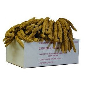 Image of Worlds Freshest Spray Millet Box Nemeth Farms the Original (B006AS4ELC)