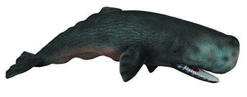CollectA Sperm Whale