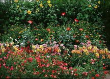 Cut Flower Seed Garden Mat - Instant Garden, Roll N Grow - Seeded Mat - Just Roll and Grow! (Easy & Hassle Free!) Plant in garden or family yard!
