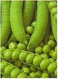 Sycamore Trading Garden Pea