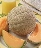Cantaloupe Hearts of Gold Great Heirloom Vegetable 50 Seeds