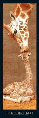 First Kiss Giraffe with Baby Art Poster Print - 12x36 Poster Print, 12x36
