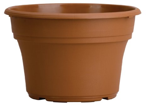 Akro Mils PA08000E22 Panterra Pot, Clay Color, 8-Inch