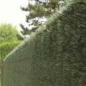 Cloture en haie Taxus artificielle 2x3m