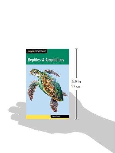 Falcon Pocket Guide: Reptiles & Amphibians (Falcon Pocket Guides)