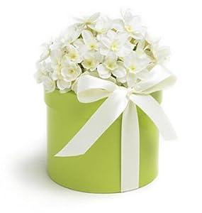 Bloembox Single Flowered Bulb Kit - Paperwhite Ziva