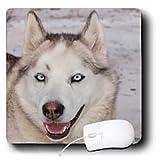31U7cwVmUML. SL160  Kike Calvo Arctic   Arctic Sledding Dog Grey, Churchill Manitoba Canada.   Mouse Pads
