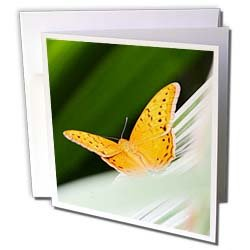 Albom Design Animals Orange Butterfly Queensland Australia Greeting Cards 6 Greeting Cards with envelopes