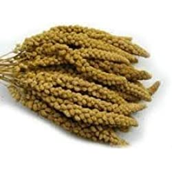 Millet Sprays naturally grown and hand picked 1kg