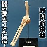 肘関節模型