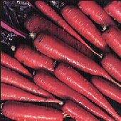 Specialty Carrot - Dragon Organic
